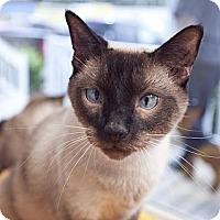 Adopt A Pet :: Dweeble - Chesapeake, VA