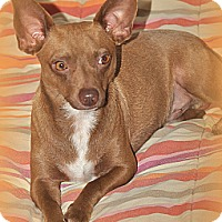 Adopt A Pet :: Tito - Miami, FL