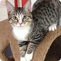 Adopt A Pet :: Dharma - Topeka, KS