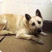 Adopt A Pet :: Bear - Beverly Hills, CA