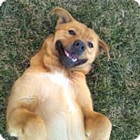 Adopt A Pet :: Phillip - Kirkland, WA