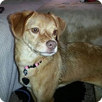 Adopt A Pet :: Topeka - Plainfield, IL
