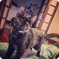 Adopt A Pet :: Serendipity - St. Louis, MO