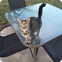Adopt A Pet :: Janta - Trevose, PA
