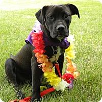 Adopt A Pet :: Bogey - Princeton, KY