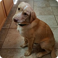 Adopt A Pet :: Ozzie - Winder, GA