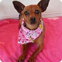 Adopt A Pet :: Claire - Lawrenceville, GA