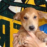 Adopt A Pet :: Halie - Oviedo, FL