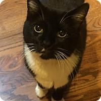 Adopt A Pet :: Fran - Philadelphia, PA