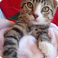 Adopt A Pet :: Bobby Socks - Scottsdale, AZ