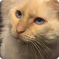 Adopt A Pet :: Melody - Glendale, AZ