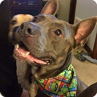 Adopt A Pet :: Harley - Kewanee, IL
