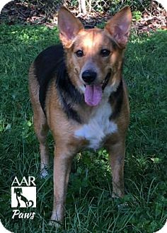 German Shepherd Dog Mix Dog for adoption in Tomball, Texas - Paws