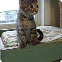Adopt A Pet :: Cuddles - Maquoketa, IA