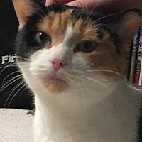Adopt A Pet :: Eva - Rochester, MI