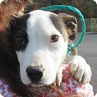Adopt A Pet :: Marla - Reeds Spring, MO