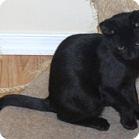 Adopt A Pet :: Eddie - Philadelphia, PA