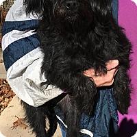 Adopt A Pet :: Kinnia - McKinney, TX