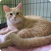 Adopt A Pet :: Taffy - Reeds Spring, MO