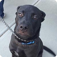 Adopt A Pet :: Boomer - Garner, NC