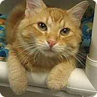 Adopt A Pet :: Jonesy - Fairbury, NE