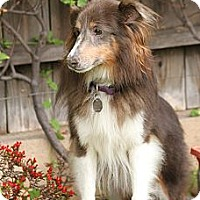 Adopt A Pet :: Haze - La Habra, CA