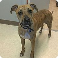 Adopt A Pet :: Katy - cameron, MO