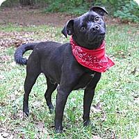 Adopt A Pet :: Brady - Mocksville, NC