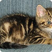 Adopt A Pet :: Bandit - Sunderland, ON