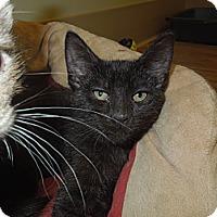 Adopt A Pet :: Blossom - Medina, OH