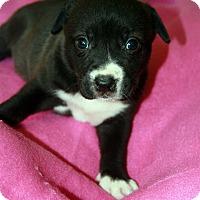 Adopt A Pet :: Darby - Baton Rouge, LA