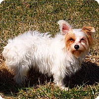 Adopt A Pet :: Mercy - Prole, IA