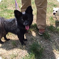 Adopt A Pet :: Tobe - Richmond, VA