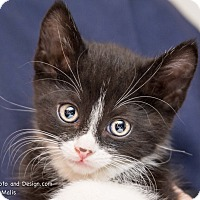 Adopt A Pet :: Grant - Fountain Hills, AZ