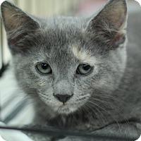 Adopt A Pet :: Ewok - Richmond, VA