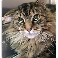 Adopt A Pet :: Bruno - Owensboro, KY
