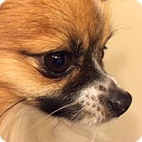 Adopt A Pet :: Max - Edmonton, AB