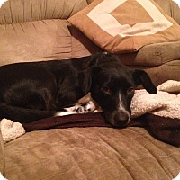 Adopt A Pet :: Jack - Wappingers, NY