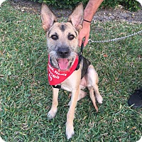 Adopt A Pet :: kelly - Coral Springs, FL