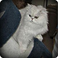 Adopt A Pet :: Maxi - Gilbert, AZ