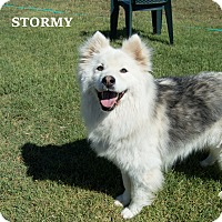 Adopt A Pet :: Stormy - Patterson, CA