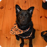 Adopt A Pet :: Shadow - Bardonia, NY