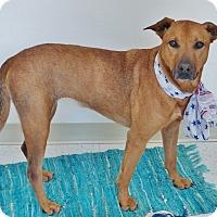 Adopt A Pet :: Sadie - Chambersburg, PA