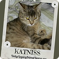 Adopt A Pet :: KATNISS - Lincoln, NE