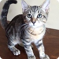 Adopt A Pet :: Bugsy - Duluth, GA