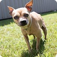 Adopt A Pet :: TITO - Houston, TX