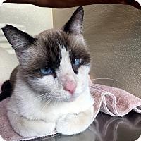 Adopt A Pet :: Travis - North Las Vegas, NV