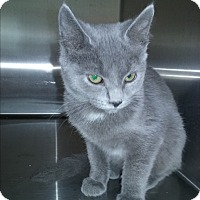 Adopt A Pet :: Rocky - Olivet, MI