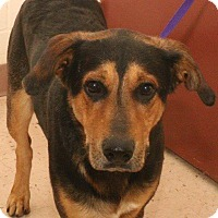 Shepherd (Unknown Type) Mix Dog for adoption in McDonough, Georgia - ROYO