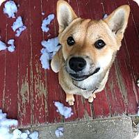 Adopt A Pet :: Kit  *Courtesy Listing - Los Angeles, CA